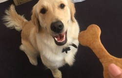 Lola and her biscuit